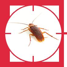 pest-cockroach