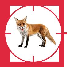 pest-fox