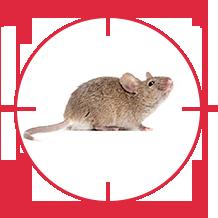 pest-mouse