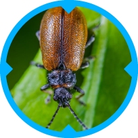 Beetle Pest Control Services