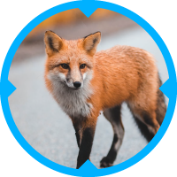 Fox Pest Control Services
